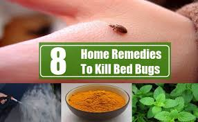 What Kills Bed Bugs And Their Eggs Stay Away From Bugs And Insects Fajar Magazine