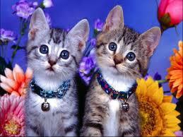 Overstock Com Pets Pets3000 Com Pet Supplies Cats Your Pet Cat