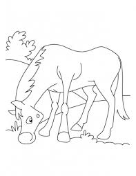 43 horses images horse coloring pages