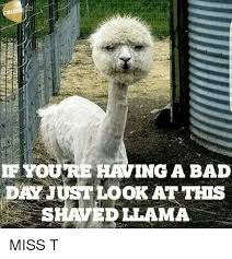 Bad Day Meme - if you re having a bad day justlook attits shaved llama eitf2哫