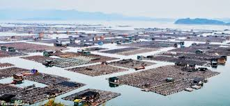 Floating Houses China U0027s Tanka Boat People U0027s Floating Homes Daily Mail Online