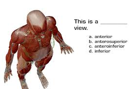 What Is Human Anatomy And Physiology 1 Anatomy And Physiology Anatomical Position And Directional Terms