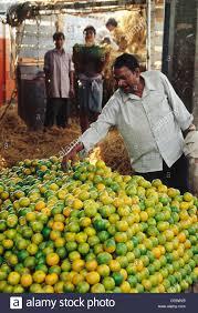 vashi market hma 85248 orange fruit seller at wholesale market vashi navi