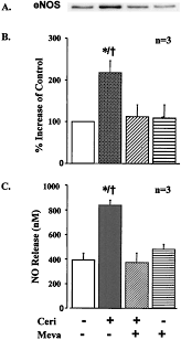 hmg coa reductase inhibition improves endothelial cell function