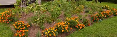 vegetable garden install vegetable garden design service