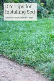 how to choose and lay sod simple practical beautiful