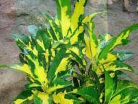 ornamental plants suppliers exporters