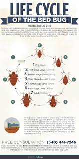 The Best Way To Kill Bed Bugs Bed Bug Life Cycle Infographic Environmental Heat Solutions