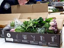 Best Flower Food U S Customs And Border Protection Inspect Flower Shipments Before