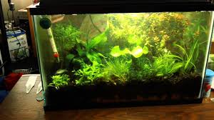 Live Plants In Community Aquariums by 5 Gallon Planted Betta Tank Update New Fish Plants Youtube