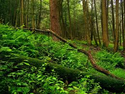 New Jersey forest images 24 amazing photos of new jersey forests and farms jpg