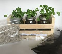 buy kitchen herb garden kit