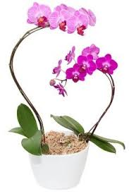 orchids care satter orchids care suggestions