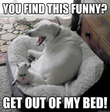 Get Out Of Bed Meme - you find this funny get out of my bed laughing at concerned dog