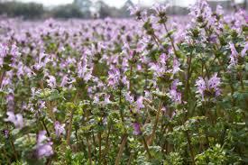 Pretty Plants by Purple Plants Beauty Lands Nature Pretty Flowers Wild Flower