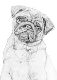 artstation graphite drawing pug rebecca smethurst