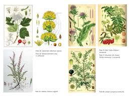native american medicinal plants secret medicines from your garden plants for healing
