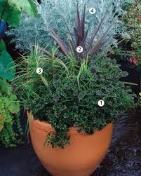 How To Grow Coleus Plants by 4 Ways To Design With Coleus Fine Gardening