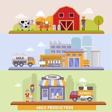 from farm to table vector illustration of production stages and processing of milk from