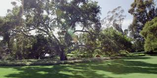Trees Backyard Oprah Reads Sue Monk Kidd U0027s Love Letter To Nature Video Huffpost