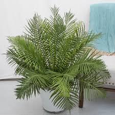 plants indoor u0026 outdoor plants mcardle u0027s garden center