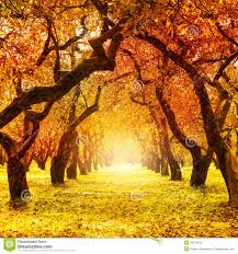 fall trees lessons tes teach