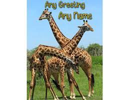 giraffe birthday card etsy uk