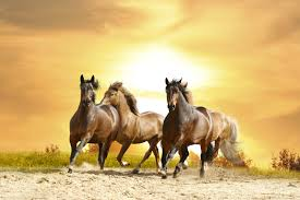 ferrari horse wallpaper galloping horse wallpapers full hdq galloping horse pictures and