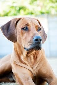 best 25 boy dog names ideas on pinterest boy puppy names name
