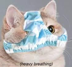 Cat Heavy Breathing Meme - heavy breathing descriptive noise know your meme