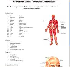 Human Anatomy Terminology Easy Medical Terminology New Muscular System Reference Guide