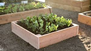 Garden Box Wood Type Step By Step Build The Ultimate Raised Bed Sunset Magazine