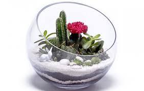 diy succulent cactus terrariums u2013 craftbnb