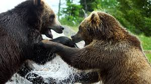 animal fight night nat geo wild