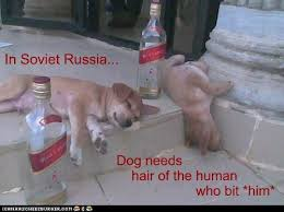 In Soviet Russia Meme - i has a hotdog in soviet russia funny dog pictures dog memes