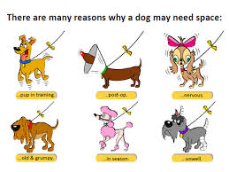 dog ribbon yellow ribbon caign hopes to raise awareness of dogs needing space