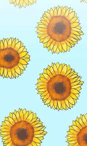 sunflower wallpapers keep your face to the sunshine and you cannot see the shadow it u0027s