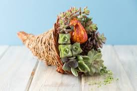 succulent filled cornucopia thanksgiving centerpiece idea