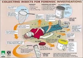 forensic entomology worksheet worksheets releaseboard free