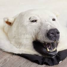fake polar bear rug with head collection
