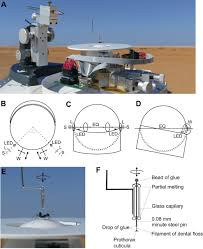Treadmill Cushion Naturalistic Path Integration Of Cataglyphis Desert Ants On An Air