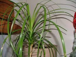Large Indoor Plants Garden Making Decorations House Plants Design Ideas House Plants