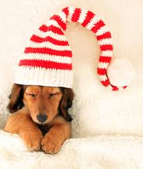 how to christmas u2013 presents for pets