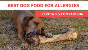 best dog food for allergies reviews u0026 recommendations crittersitca