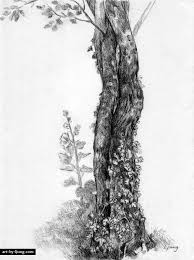 pencil drawings of landscapes wild flowers