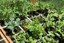stylish square foot vegetable gardening planning a square foot