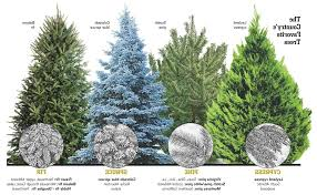 Garden Tree Types - type christmas tree home design inspirations