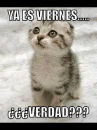 Meme Viernes - ya es viernes gatos pinterest spanish memes memes and humor