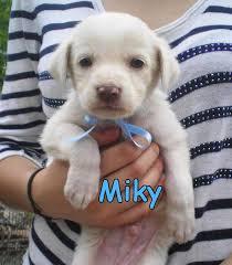 cani in cerca di casa micky cerca casa animali