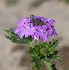 native plant propagation npp home